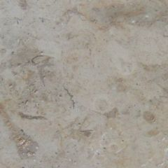 Antique Marble Walnut Fossil 30.5 x 30.5cm